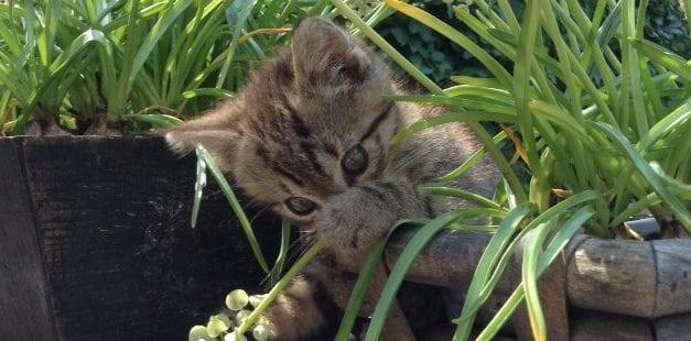 Verhaal van Sjakie, de gemiste kat