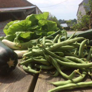 Wiette dorp groente