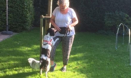 Op Dierendag aandacht voor hondenbaan