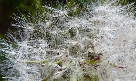 Allergie: lief dagboek, vertel me waarvoor ik gevoelig ben