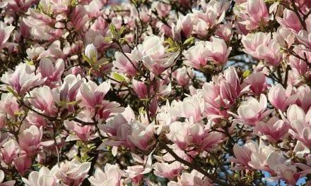 5x Lezen in april: Wiette's tips voor goed tuinboek