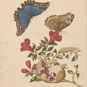 De schatkamercollectie van Maria Sibylla Merian