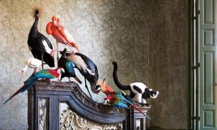 Tentoonstelling Tier in MOA: een bijzondere kijk op het dierenrijk