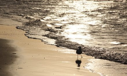 De Keuze van Kees: Telkens terug naar de kust…