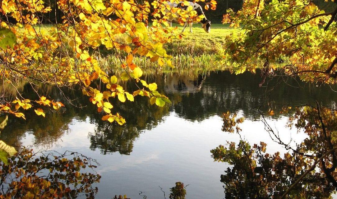 De Keuze van Kees: Herfst vol herinneringen