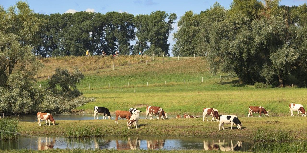 Fietsroute door Gelders landschap