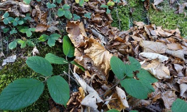 5 tips van een doorsnee tuinliefhebber