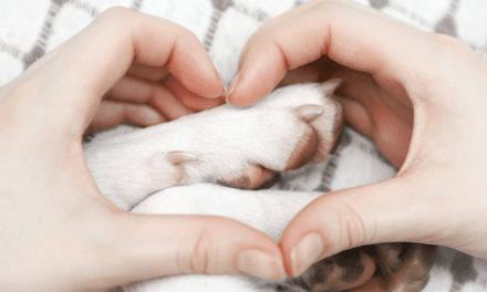 Bang voor boek over rouwproces huisdier