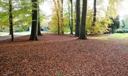 De keuze van Kees: Op zoek naar de herfst