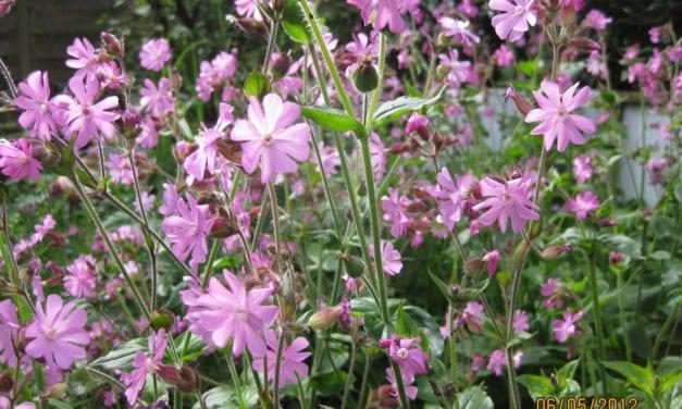 Heb uw onkruid als wilde bloemen lief!