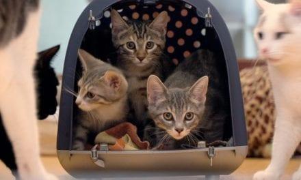 Cat Stories, het verhaal van onze liefde voor katten
