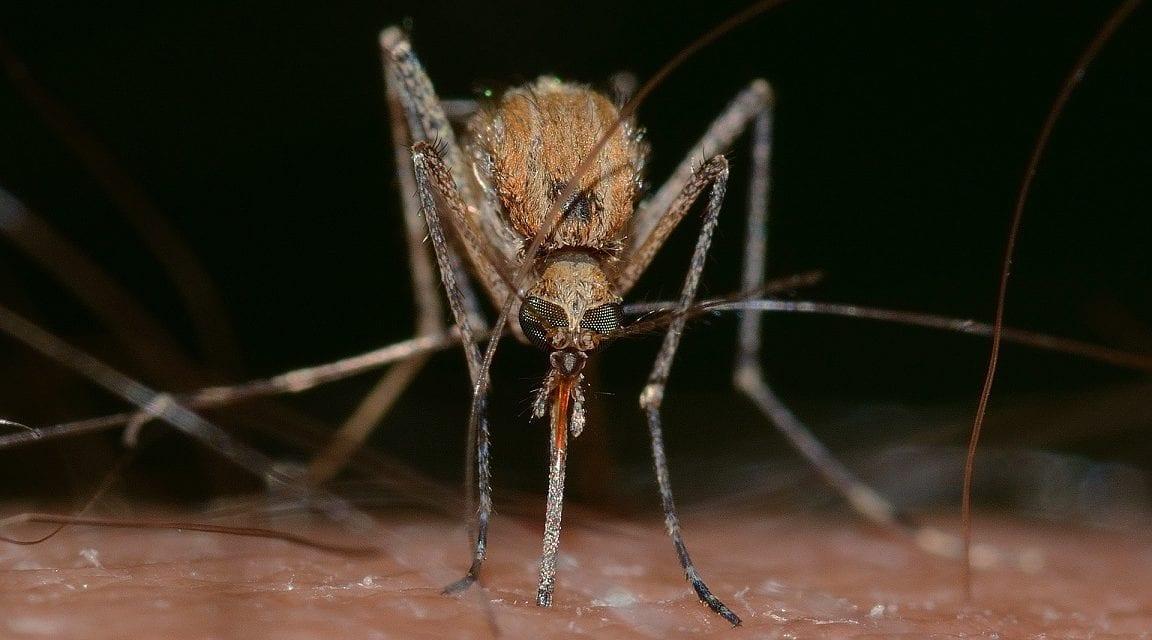 Muggen, ze kunnen mijn bloed wel drinken…