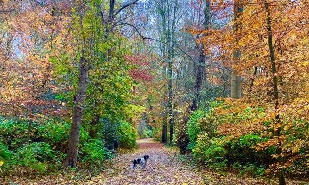 Genieten van de herfst, wandeling door goud