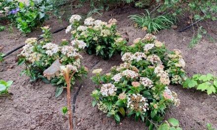 Tijd om te tuinieren: thuisblijven kan ik buiten doen!