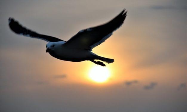Vogelaars hebben (corona)wind mee