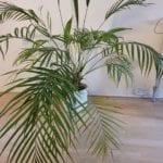 Dromen van nieuwe kamerplanten