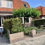Tegel eruit, groen erin: plant een dakplataan