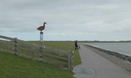 Terschelling: fietsen tussen de vogels